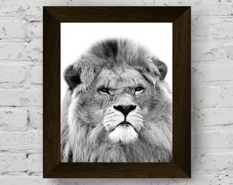 lion photography, lion print, animal print nursery, black white animal, african animal photo, animal poster, digital download, printable art