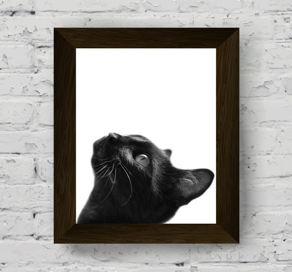 black and white animal wall art, nursery animals print, pet portrait, cat  photography, kids room poster, printable artwork, digital download