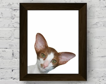 cat print, animal wall art, animal print nursery, kids room poster, wall art prints, cat photography printable artwork, digital download