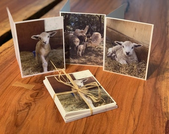 Sheep & Lambs Note Cards - Farm Life Greeting Cards