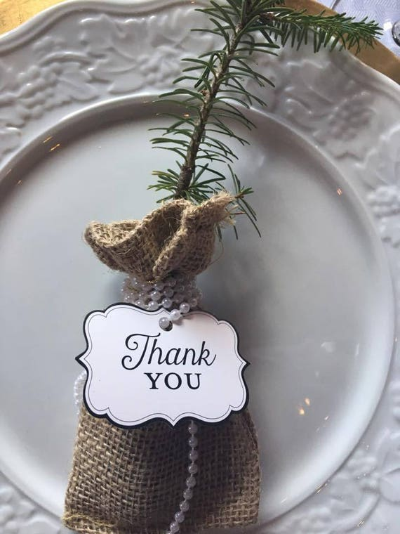 White Pine And Balsam Fir Seedlings Weddingparty Favors Etsy