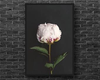 Pink Peony Print Peony Photography Pink Flower Print   Etsy on