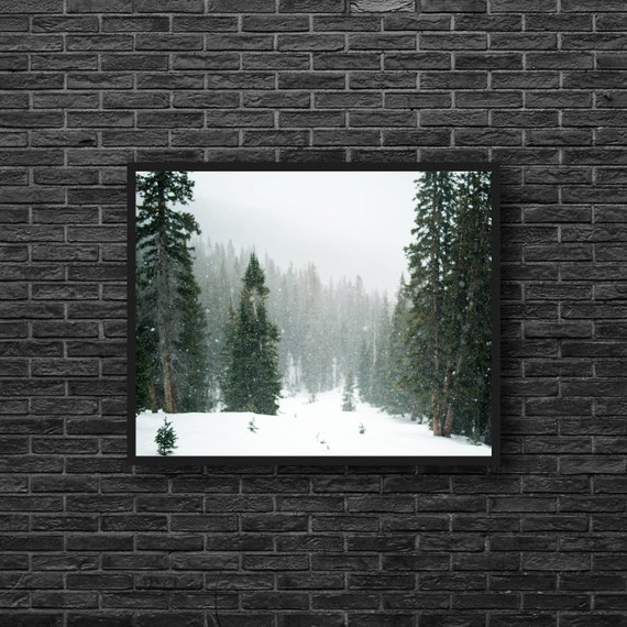 Evergreen Photography - Winter Forest Print - Snowy Forest Photo - on