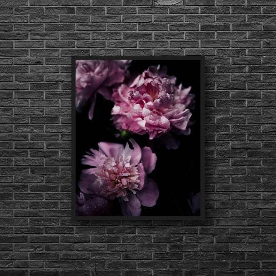 Pink Peony Print - Peony Photography - Pink Flower Print - Black Background on