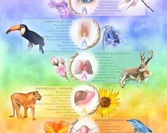 Chakras Art - Animals and Energy Art - Chakra Print