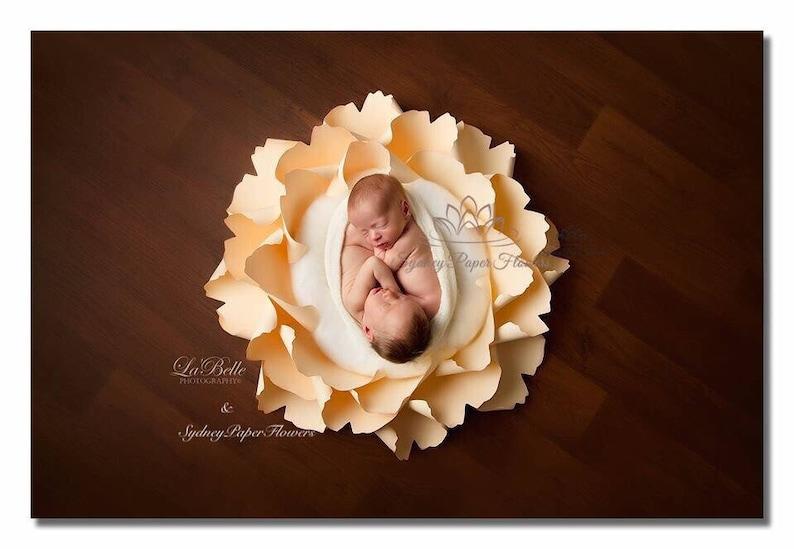Newborn Posing Paper Flower Video Tutorial Template Pdf Svg Cricut Silhouette Cameo Paper Flower Pattern Newborn Baby Nest Paper Flower