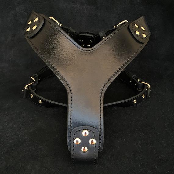 Bestia The /'/'DAlbertis/'/' harness