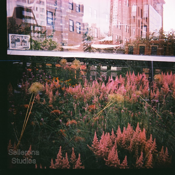 Pink Flowers on The Highline