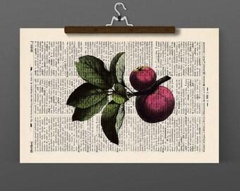 Pressure RED APPLE - antique book page - landscape