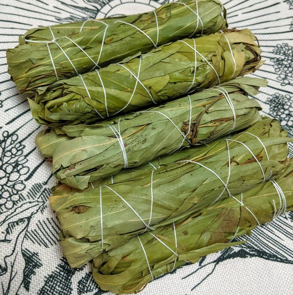 Organic Eucalyptus Smudge Sticks / For Removing Negativity Energy, Meditation, & Rituals / Wonderful Energy cleanse and a Boost of Health