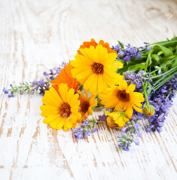 Organic Calendula & Lavender Herbal Oil! / Gentle Love for Your Skin, Lips, and Hair!