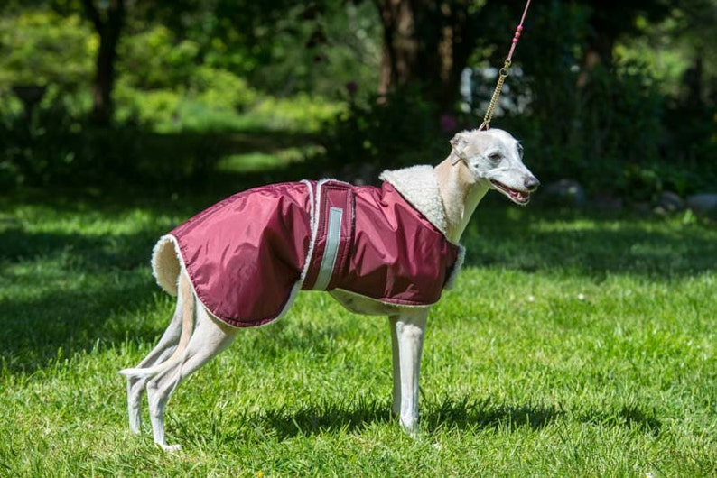 whippet   waterproof  dog coat  in any colour in sizes burgundy