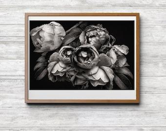Die Innere Schönheit, Download, Fotografie, Schwarz Weiss Fotografie,  Fotokunst, Blumen Natur, Pfingstrosen, Haus Büro Hotel Dekor
