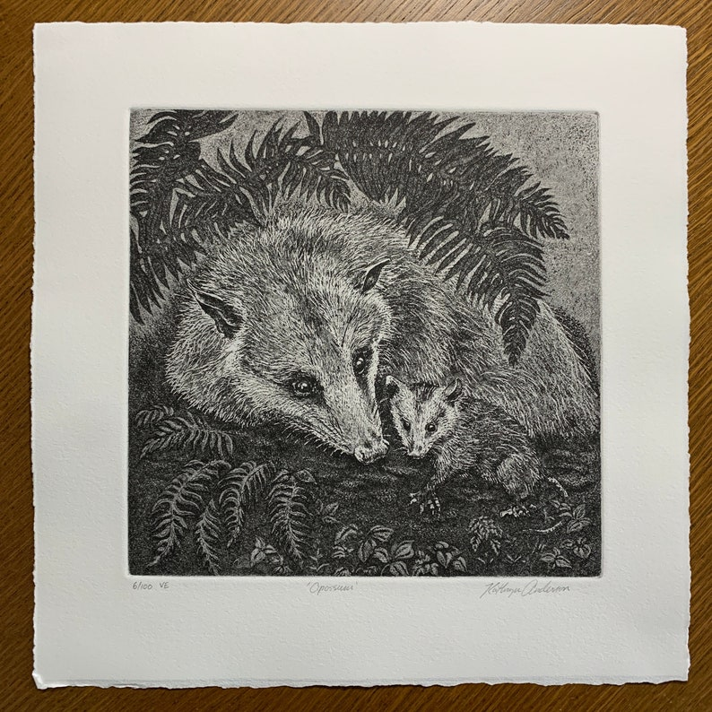 Opossum Etching Limited edition possum Black without mat