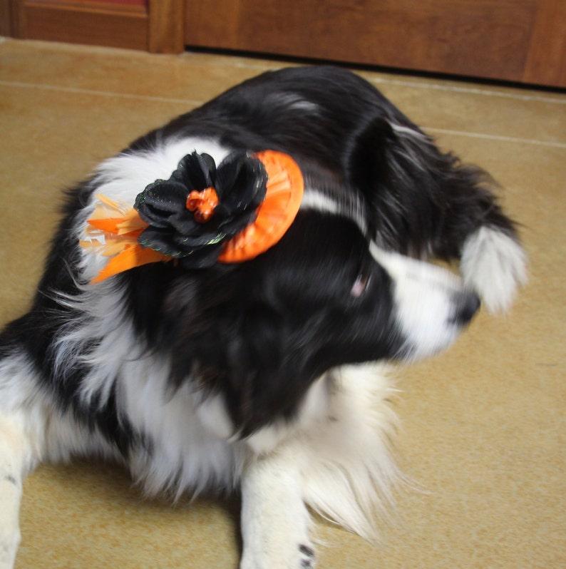 Pet Fascinator Orange Dog Hat Pet Hat with Flower Feathers and Ribbon Orange and Black Dog Fascinator Orange Dog Fascinator
