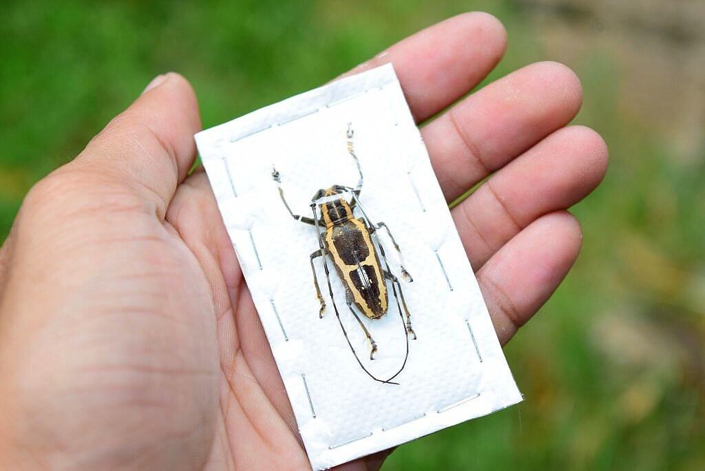 colección de insectos insectos insectos insectos | Etsy