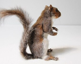 taxidermied squirrels