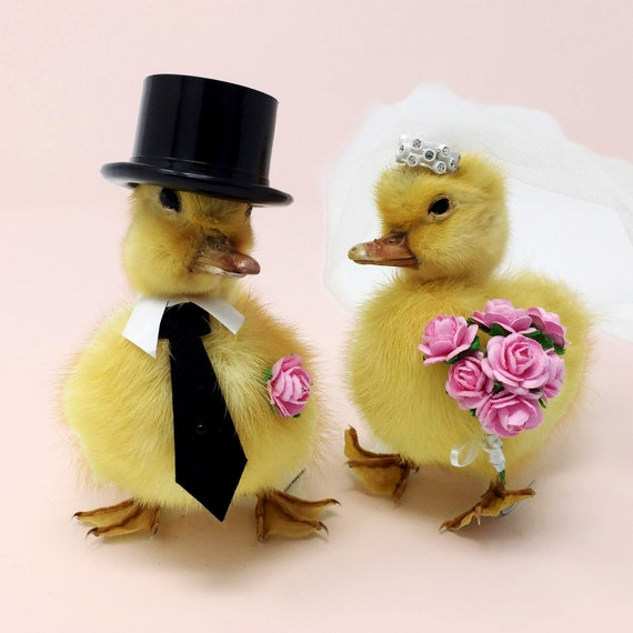 Taxidermy Duck wedding cake topper Bride and Groom real | Etsy