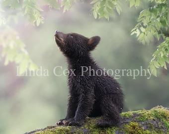 HIGH AND LONESOME by Derk Hansen Baby Bear Cub Up A Tree 17x21 FRAMED ART PRINT