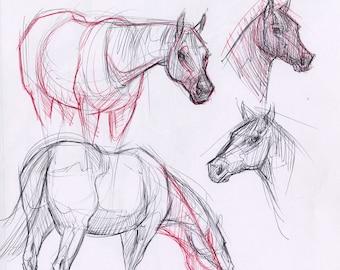 "ORIGINAL DRAWING ""Horse Sketches"""