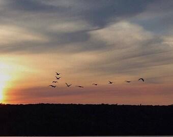 Birds and sunset in door county 8x10 print