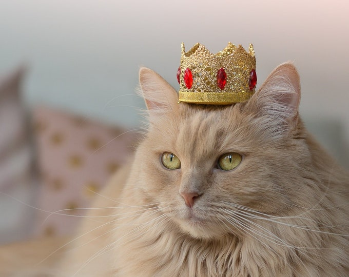 Featured listing image: Golden King crown hat for cat with rhinestones - Royal Red Hat for Regal Cats - Royal Crown Hat - Costumes for cat and dog