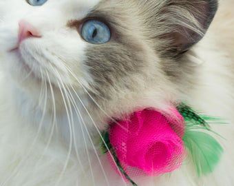 Pink rose cat collar 'The Rose Garden' with pretty cotton rose pattern collar - breakaway or non-breakaway collar