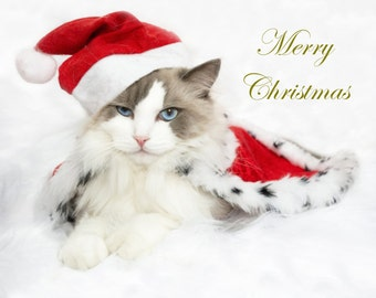 Merry  Cat e-Card  - Golden Edition