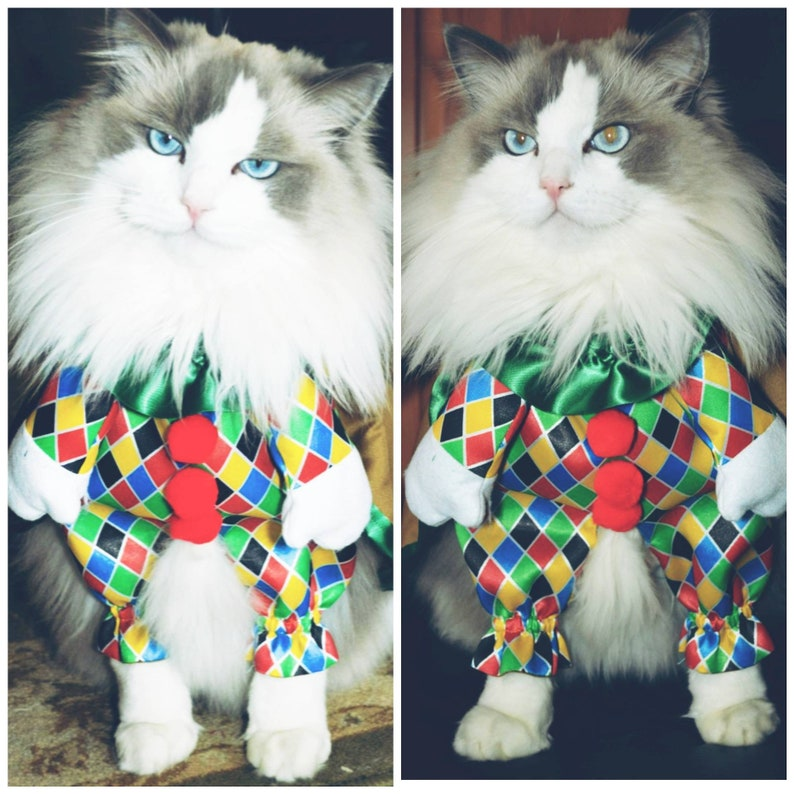 bb88007e0ea Cat costume / dog costume /fancy costume for pet /Funny Costume for Pet /  cape for cat/ cute pet costume /harlequin