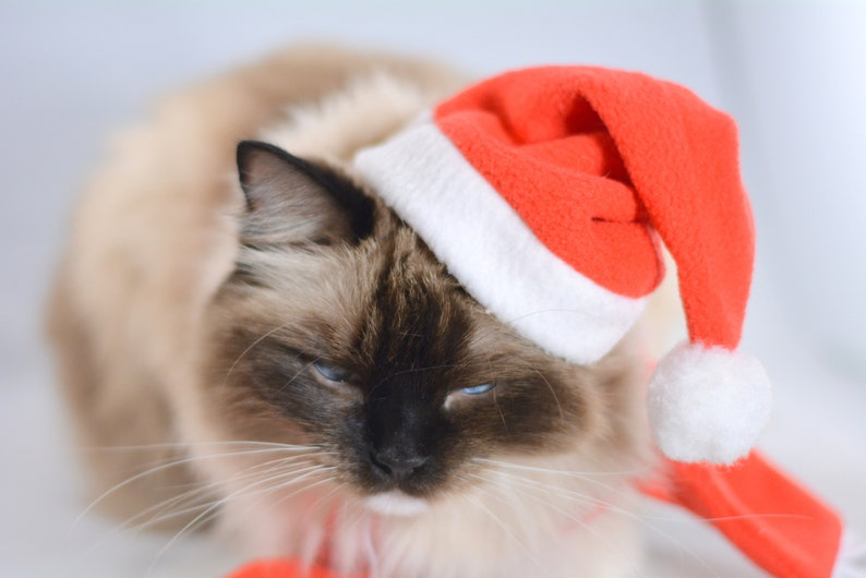 costume for dog personalized Santa hats for dogs Christmas hat elf hat costumes for cat Santa hat for cats