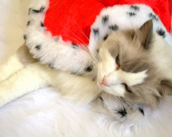 Christmas hat & cape / Costume for cat, costume for dog, red cloak, King cat costume, pet  costume