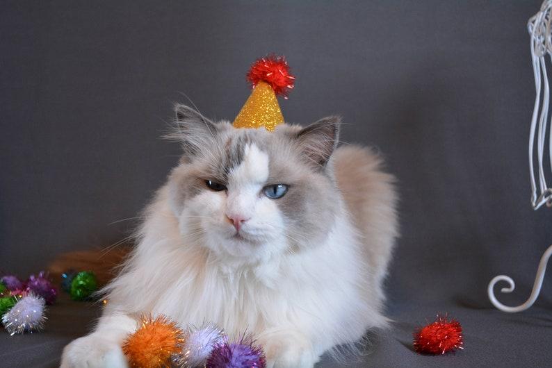 Glittery Hat For Cat Birthday Dog