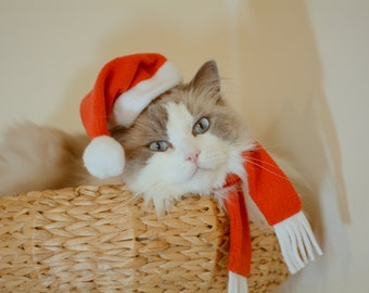 Christmas Hat + Scarf + Toy / Christmas gift packages, hats for cats, costumes for cat and dog / Crafts4Cats