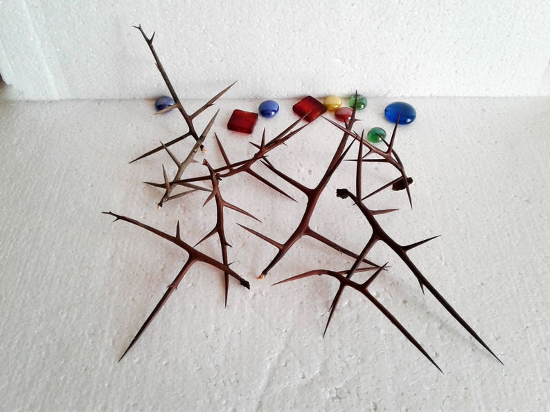 Wood thorns Natural ornament Sharp spikes Christmas Easter decor supplies Floral arrangement Christ crown Witchcraft wand supply Nature
