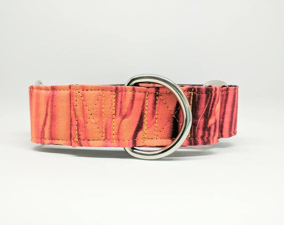 Orange Crush Collar: Martingale, Buckle Dog Collar