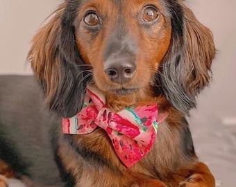 Pet bow tie | LEXIE | For cat, kitten, dog, puppy |