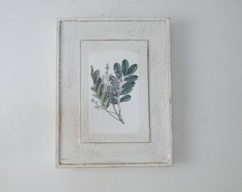 Antique Botanical Print on Wood vintage botanical print, framed botanical print, botanical prints, garden print, farmhouse decor