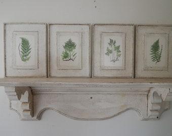 Botanical Fern Prints Set of Four/ vintage botanical prints/botanical prints/garden prints/fern prints