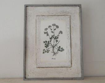 Antique Botanical Herb Print on Wood vintage botanical print, botanical prints, farmhouse decor, garden print, herb print