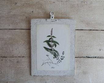 Antique Botanical Herb Print on Wood  vintage botanical prints, botanical prints, farmhouse decor, herb prints