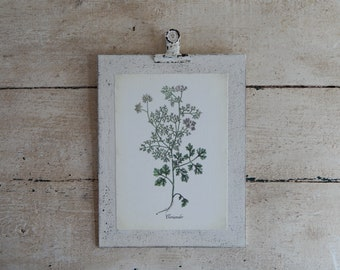 Botanical Clip Prints
