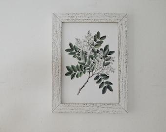 Antique Botanical Print on Wood vintage botanical prints, botanical prints, farmhouse decor ,painted white distressed wood frame