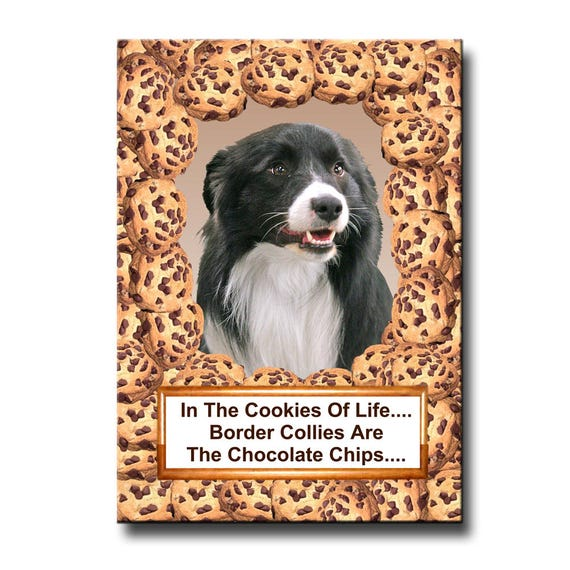 Border Collie Chocolate Chip Cookie Fridge Magnet No 1