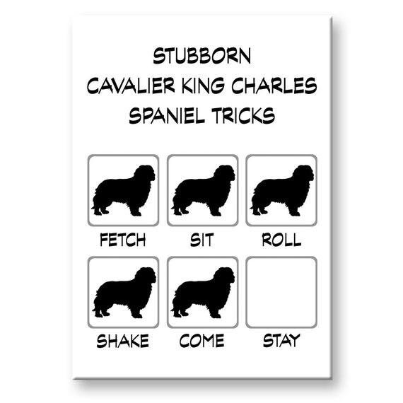 Cavalier King Charles Spaniel Stubborn Tricks Fridge Magnet