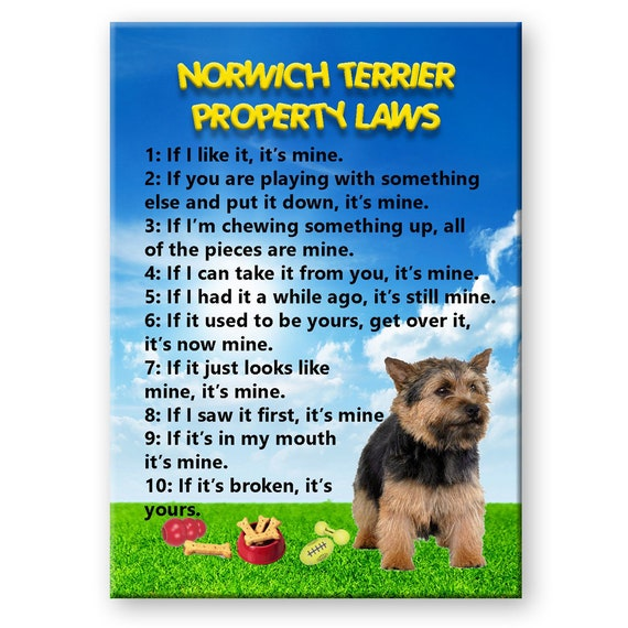 Norwich Terrier Property Laws Fridge Magnet No 2