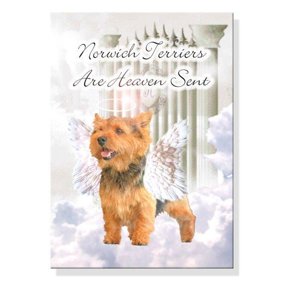 Norwich Terrier Heaven Sent Fridge Magnet