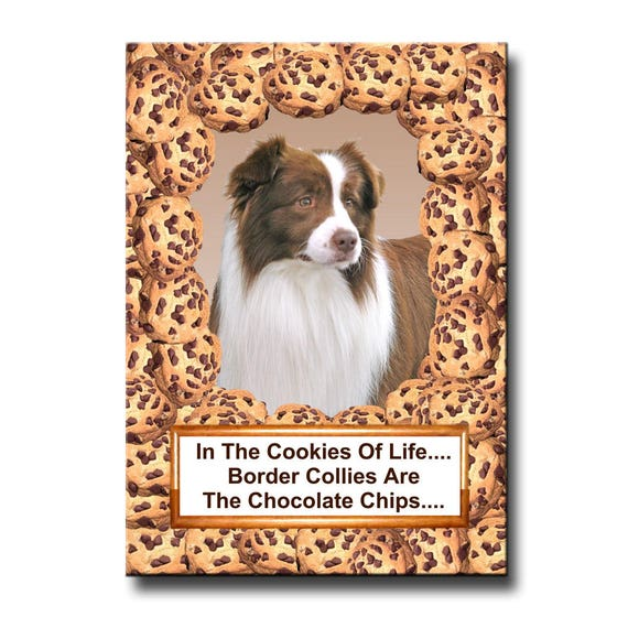 Border Collie Chocolate Chip Cookie Fridge Magnet No 2