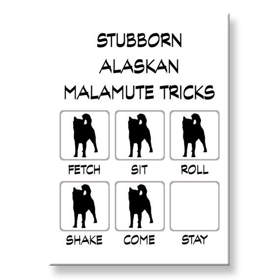 Alaskan Malamute Stubborn Tricks Fridge Magnet
