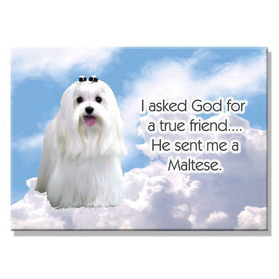 Maltese True Friend Fridge Magnet
