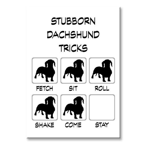 Dachshund Stubborn Tricks Funny Fridge Magnet